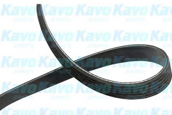 KAVO PARTS DMV5532 Поликлиновой ремень